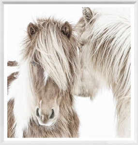 Icelandic Ponies - Mini White