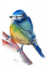 Load image into Gallery viewer, Blue Tit Print