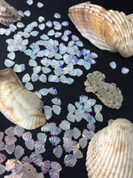 Hunting Sea Shells
