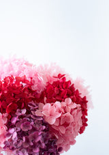 Premium hydrangeas in a red pink maroon shades of pink to symbolise love for a home perfect for decoration