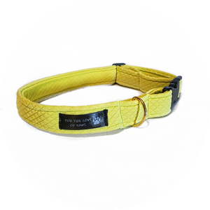 Neon Yellow Collar