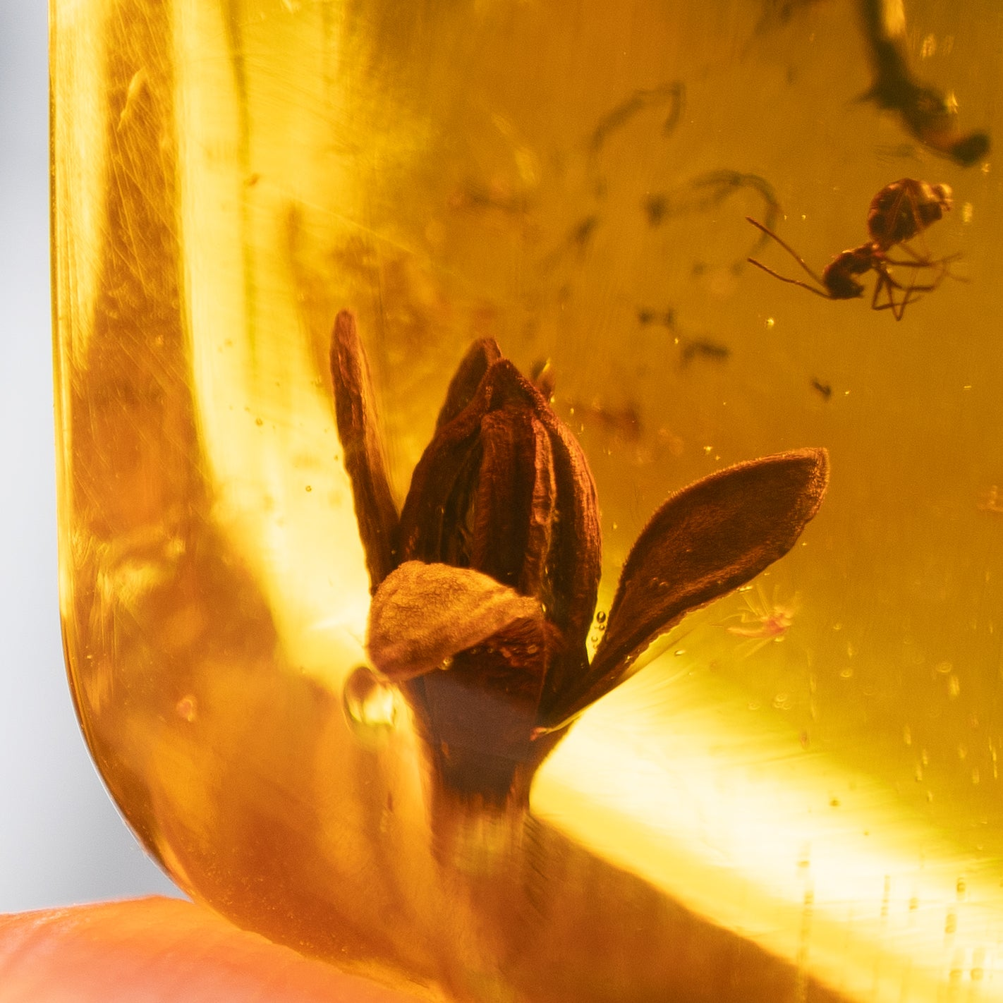 Dominican Green Amber Fossil Flower