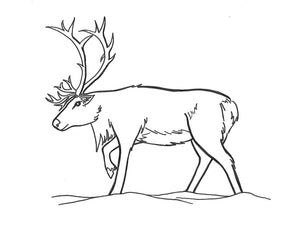 Caribou Activity Sheet