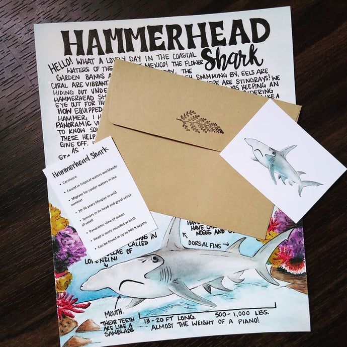 Hammerhead Shark June 2020 Letter