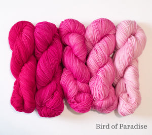 Five skeins of RCY Adam & Eve Gradients in Bird of Paradise