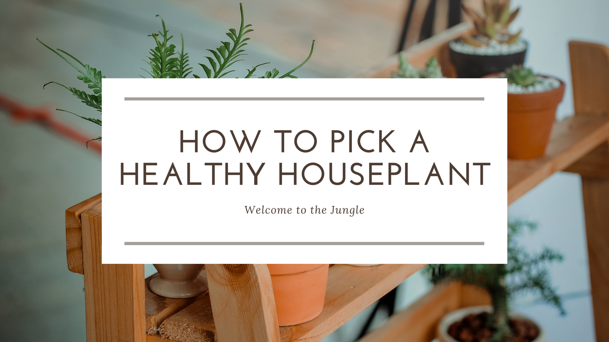 How to Pick a Healthy Houseplant