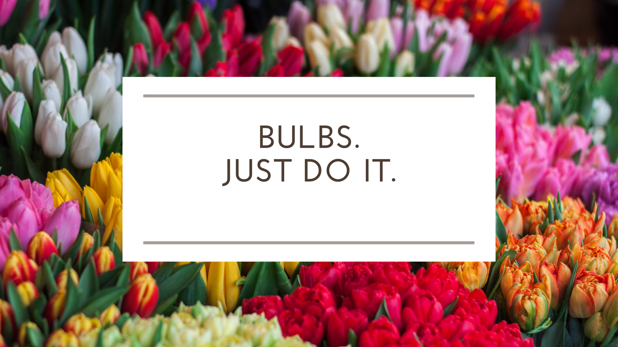 Bulbs. Just do it.