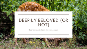 Deer-ly beloved (or not)