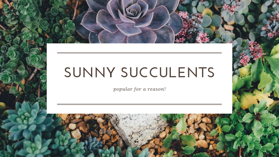 Sunny Succulents
