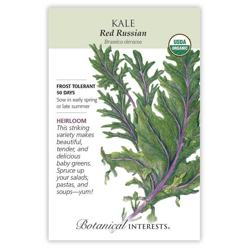 Kale Red Russian Seeds Organic