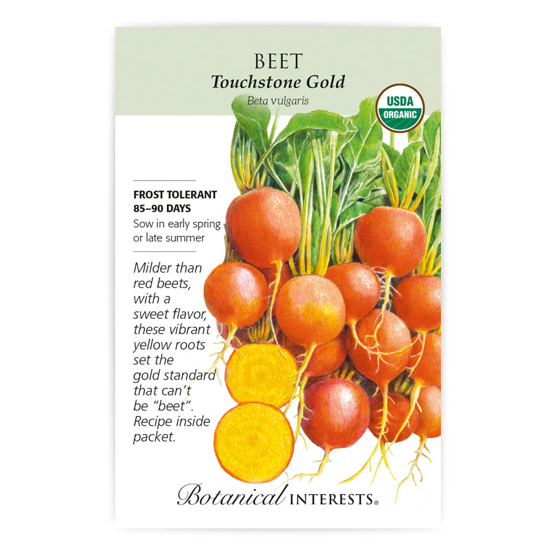 Beet, Touchstone Gold  Seeds Organic