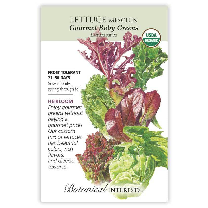 Lettuce Mesclun Baby Greens Seeds Organic