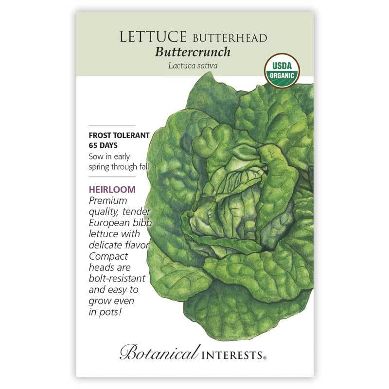 Lettuce Buttercrunch Seeds Organic