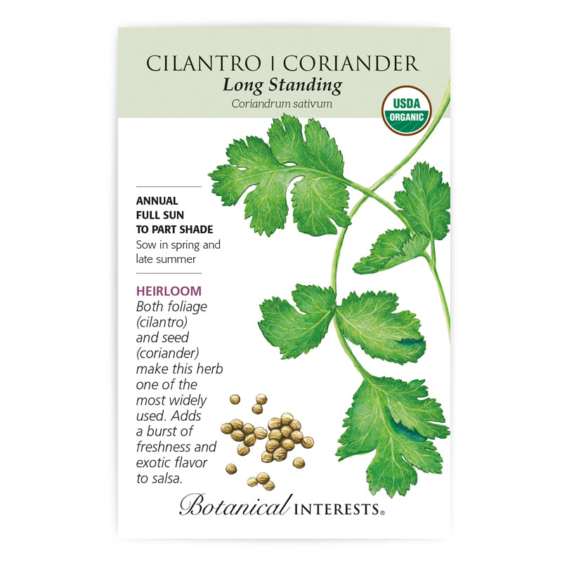 Cilantro Long Standing Seeds Organic - LARGE