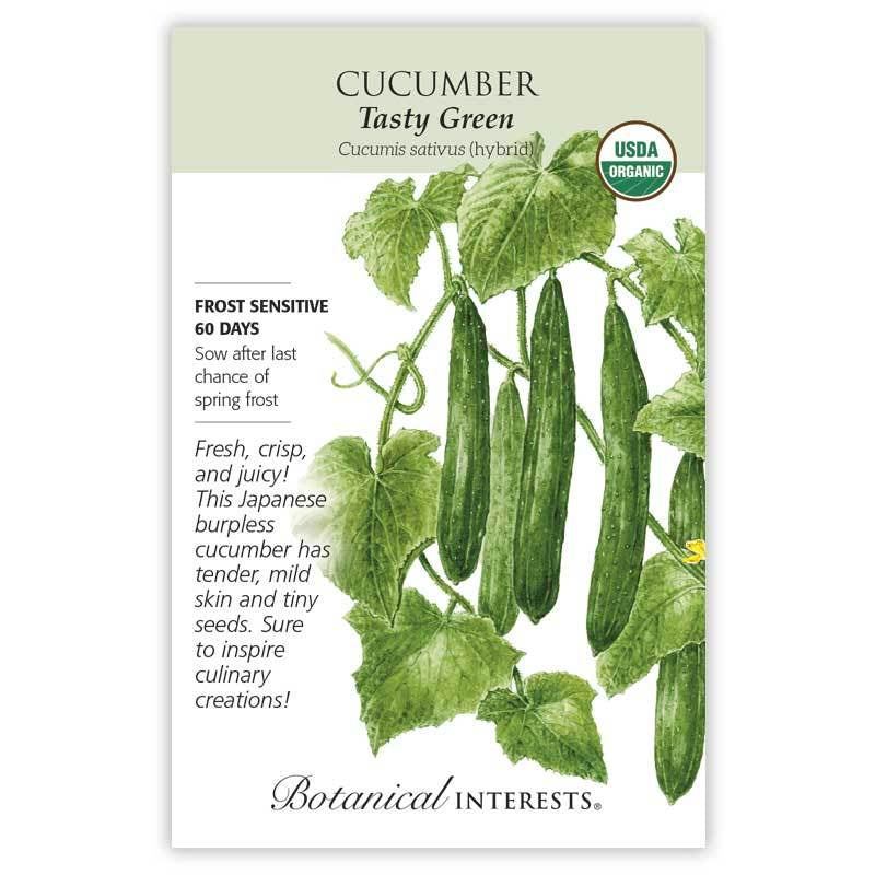 Cucumber Tasty Green Seeds Organic