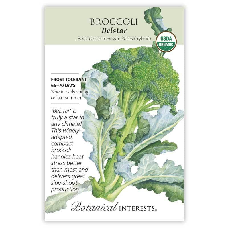 Broccoli,  Belstar Seeds Organic