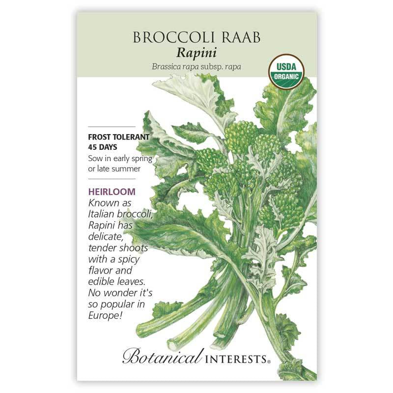 Broccoli Raab, Rapini Seeds Organic
