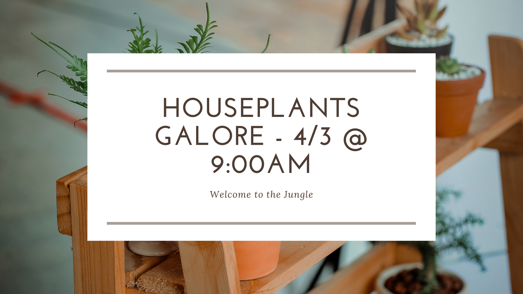 Houseplants Galore! - Spring 2021