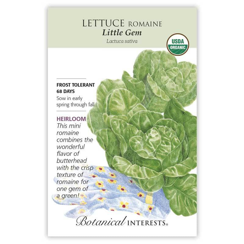 Lettuce Little Gem Seeds Organic