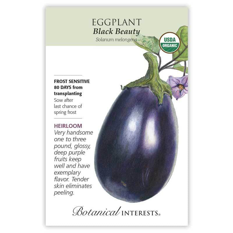 Eggplant Black Beauty Seeds Organic