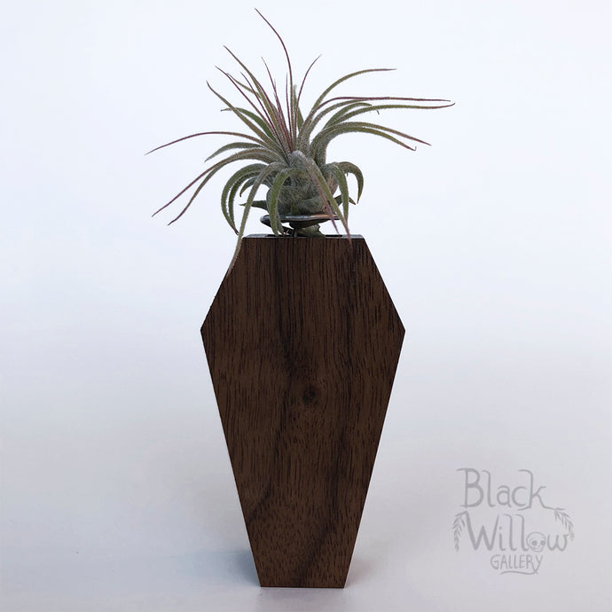Black Walnut Coffin Planter