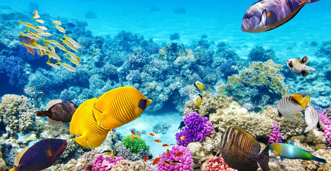 best-snorkelling-spots-in-sydney-for-inexperienced-snorkellers-and-kids