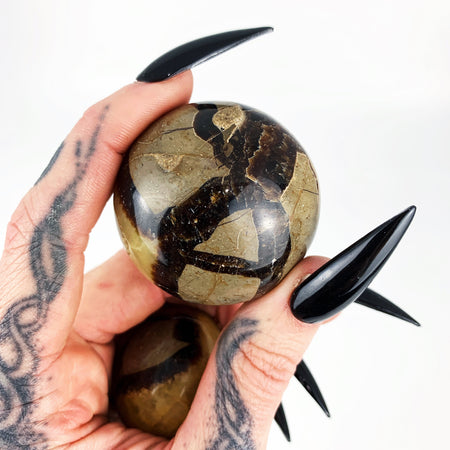 Septarian Palm Stone (Small)