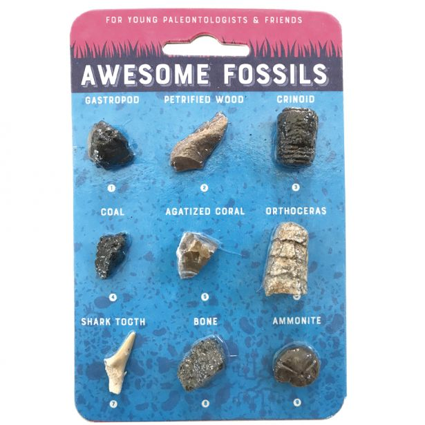 Awesome Fossils of the US