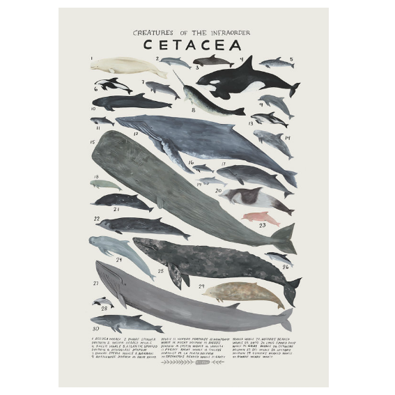 Kelzuki Creatures of the Infraorder Cetacea Print