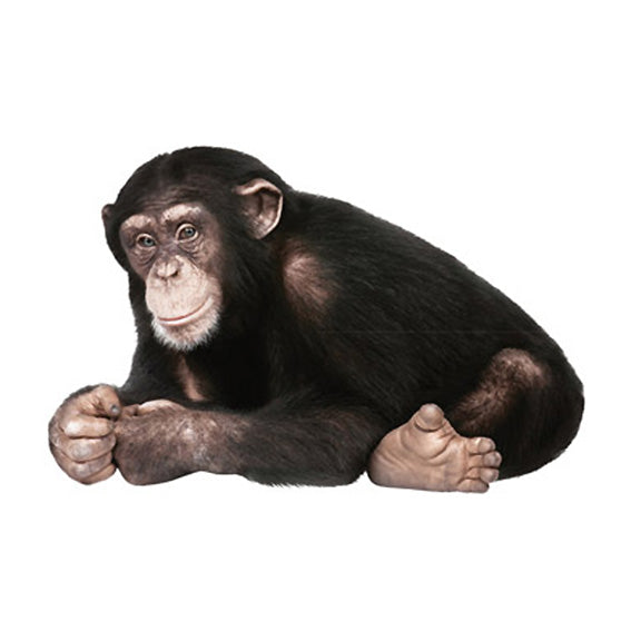 Chimpanzee Wall Sticker