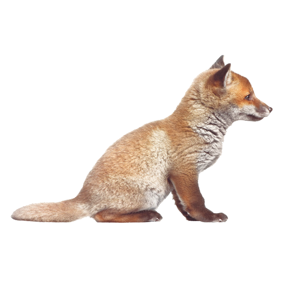 Fox Cub Wall Sticker