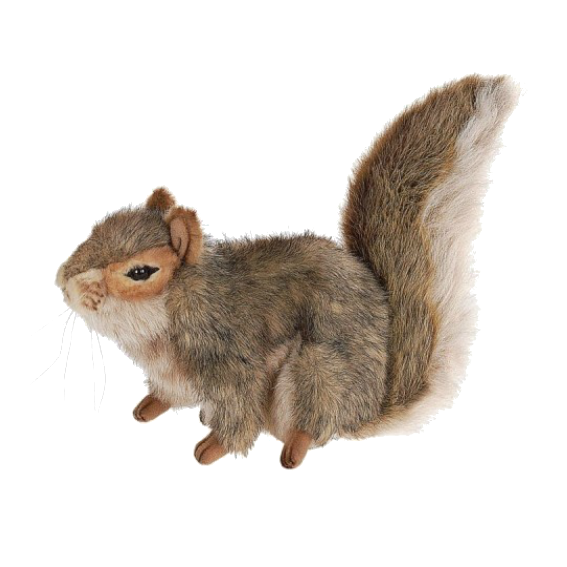 Hansa Squirrel