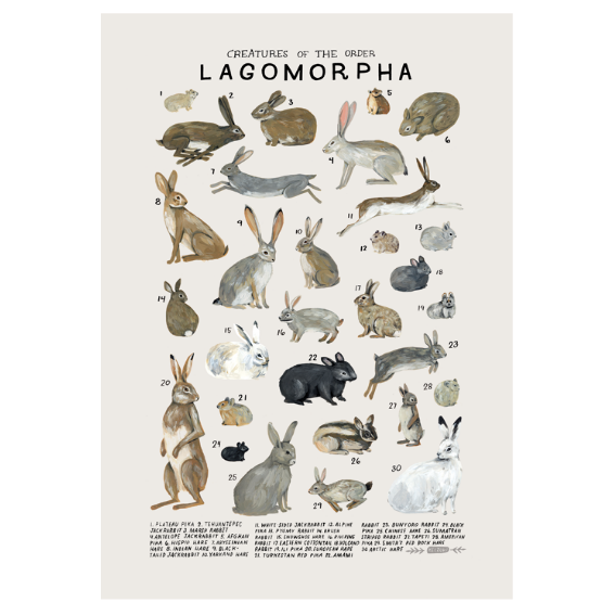 Kelzuki Creatures of the Order Lagomorpha