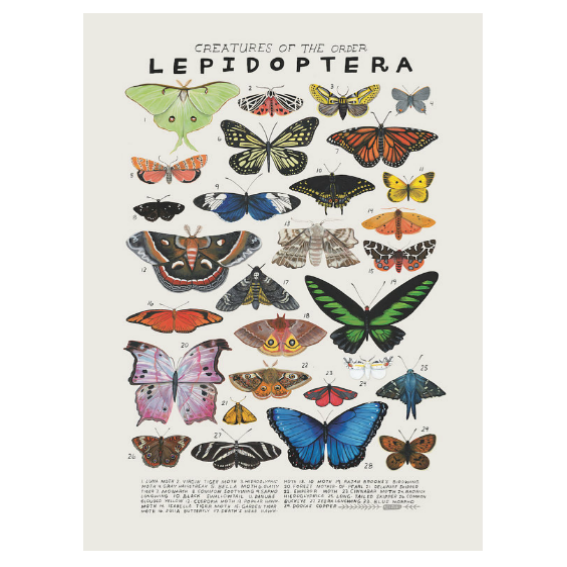 Kelzuki Creatures of the Order Lepidoptera Print