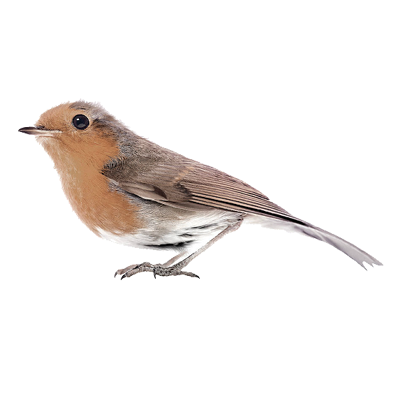 Robin Wall Sticker