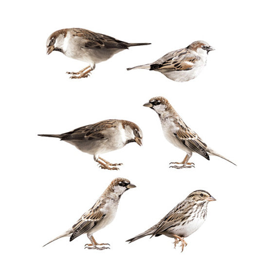 Sparrow Wall Stickers