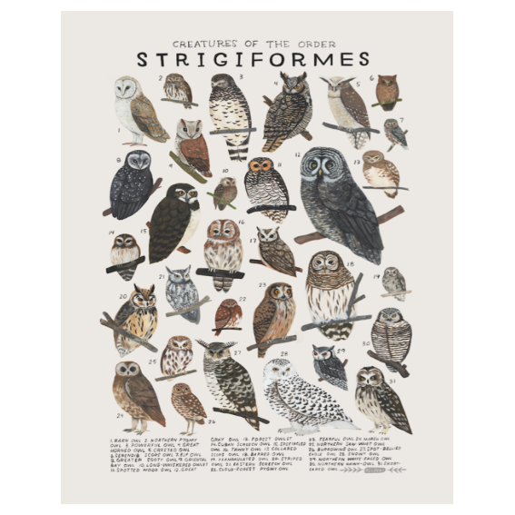 Kelzuki Creatures of the Order Strigiformes Print