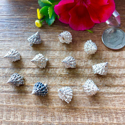 Spiral mini sea shell Castings