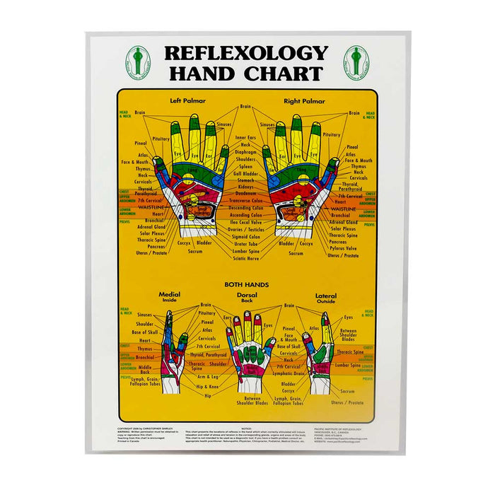 Foot & Hand Reflexology Chart