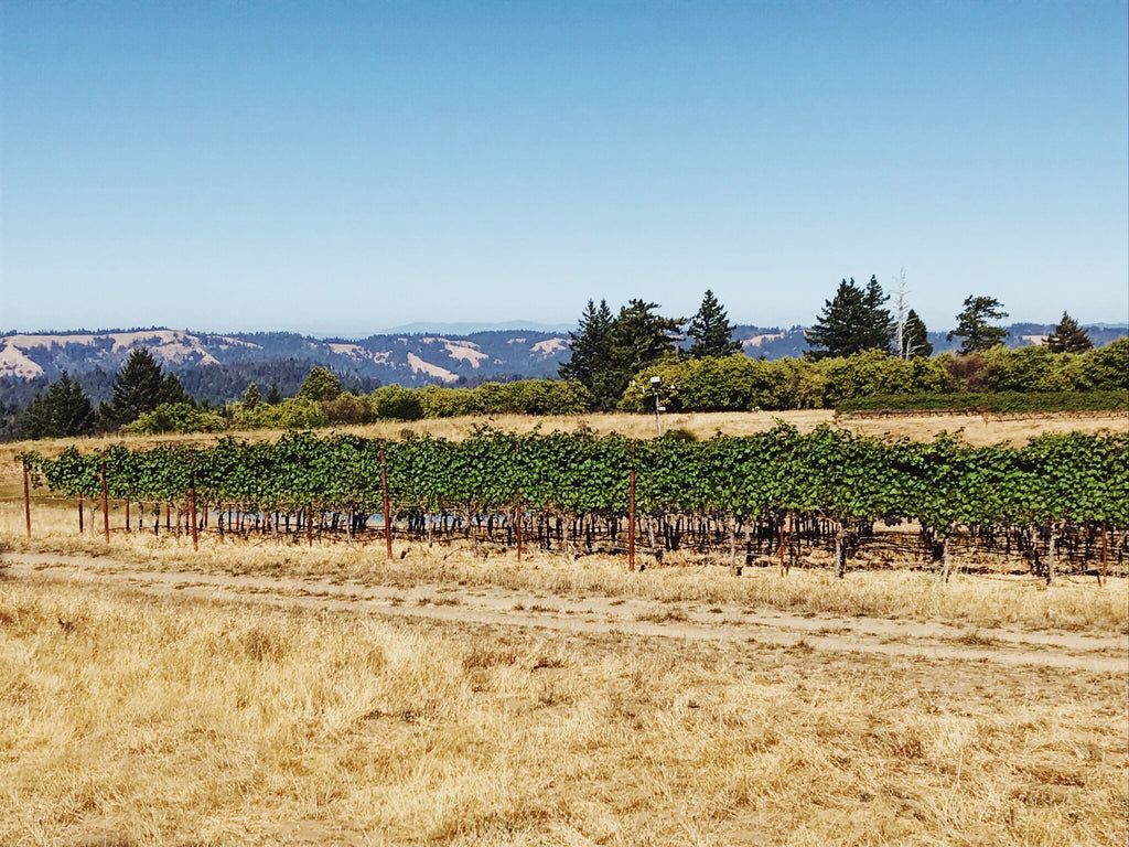 Manchester Ridge Vineyard Minus Tide Wines