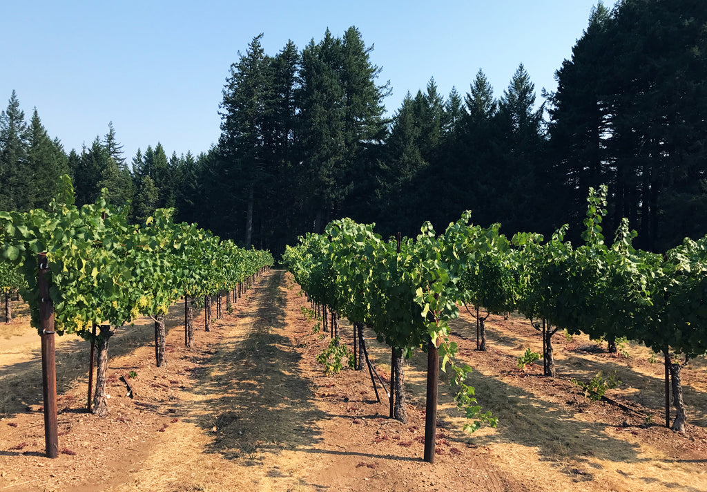 Mariah Vineyard Minus Tide Wines