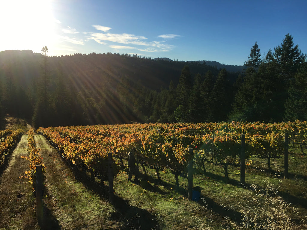 Valenti Vineyard Minus Tide Wines