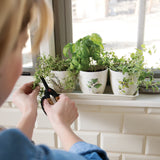 Herb Planter Set - Grace & Grits