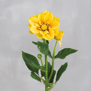 Pick - Yellow Dahlia