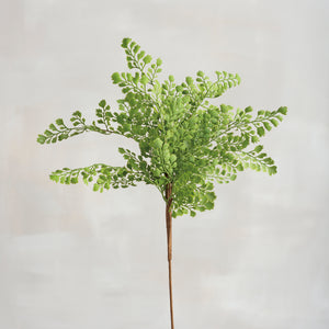 Pick - Maidenhair Fern