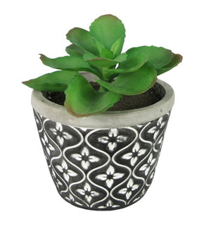 Black and White Stone Pot Succulent