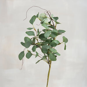 Pick - Eucalyptus (Medium)