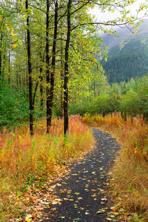 Forest Path Alaska II