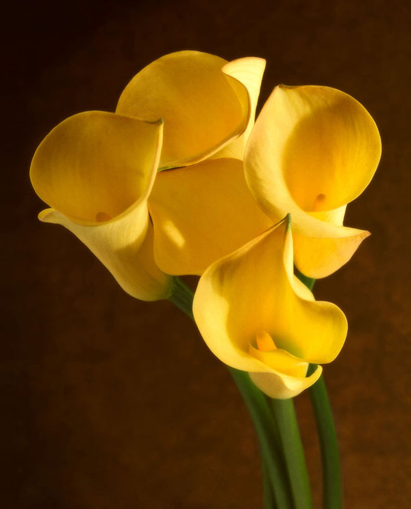 Golden Callas
