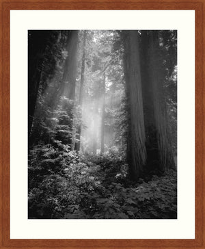 Framed Print - Fog & Light